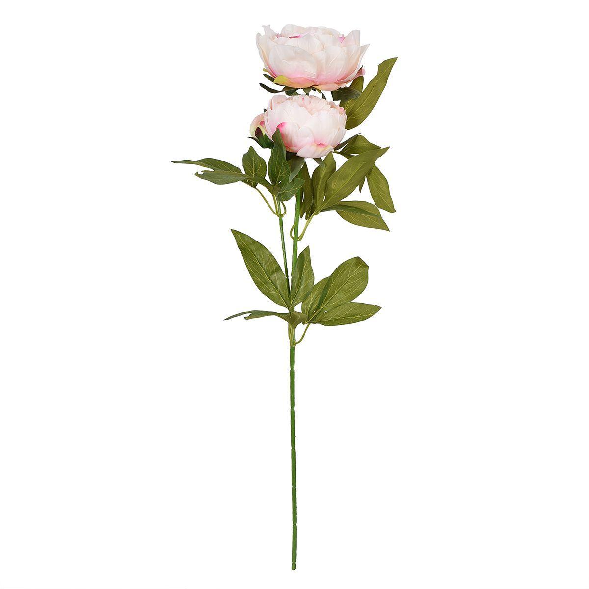 Декоративные пышные цветы Пиона нежно-розового цвета