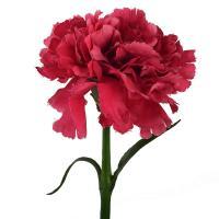 Искусственный цветок Гвоздики цвета фуксии