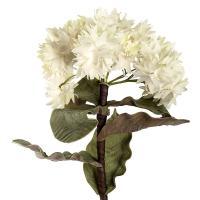 Гортензия крупнолистная белая, декор для дома
