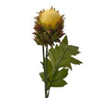 Василек крупноголовый желтый, декор для дома