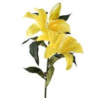 Лилия ланцетолистная тигровая желтого цвета