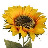 Крупный декоративный цветок Подсолнуха