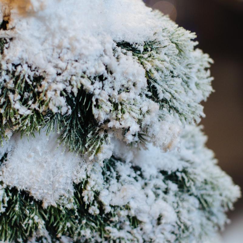 Заснеженная елка  - фото