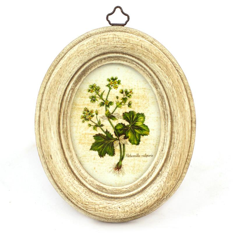 "Набор из 4-х картин ""Ботаника""  - фото"